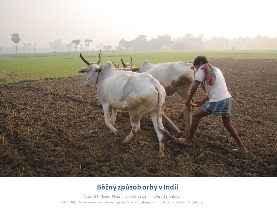 Běžný způsob orby v Indii Autor: ILRI Název: Ploughing_with_cattle_in_West_Bengal.jpg Zdroj: http://commons.wikimedia.org/wiki/File:Ploughing_with_cat