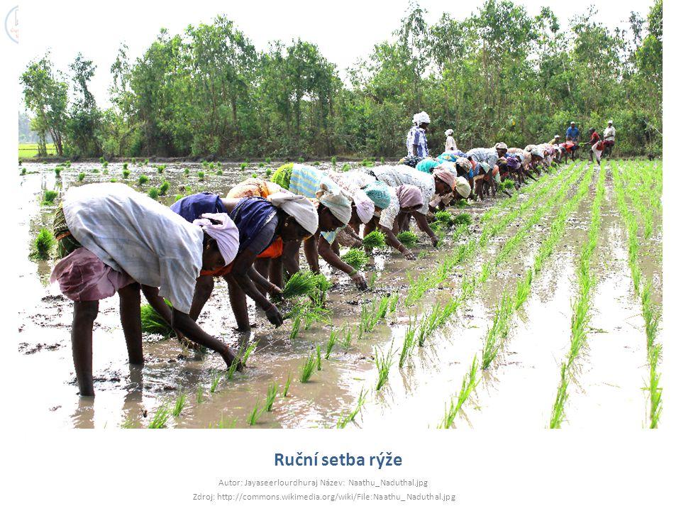 Ruční setba rýže Autor: Jayaseerlourdhuraj Název: Naathu_Naduthal.jpg Zdroj: http://commons.wikimedia.org/wiki/File:Naathu_Naduthal.jpg