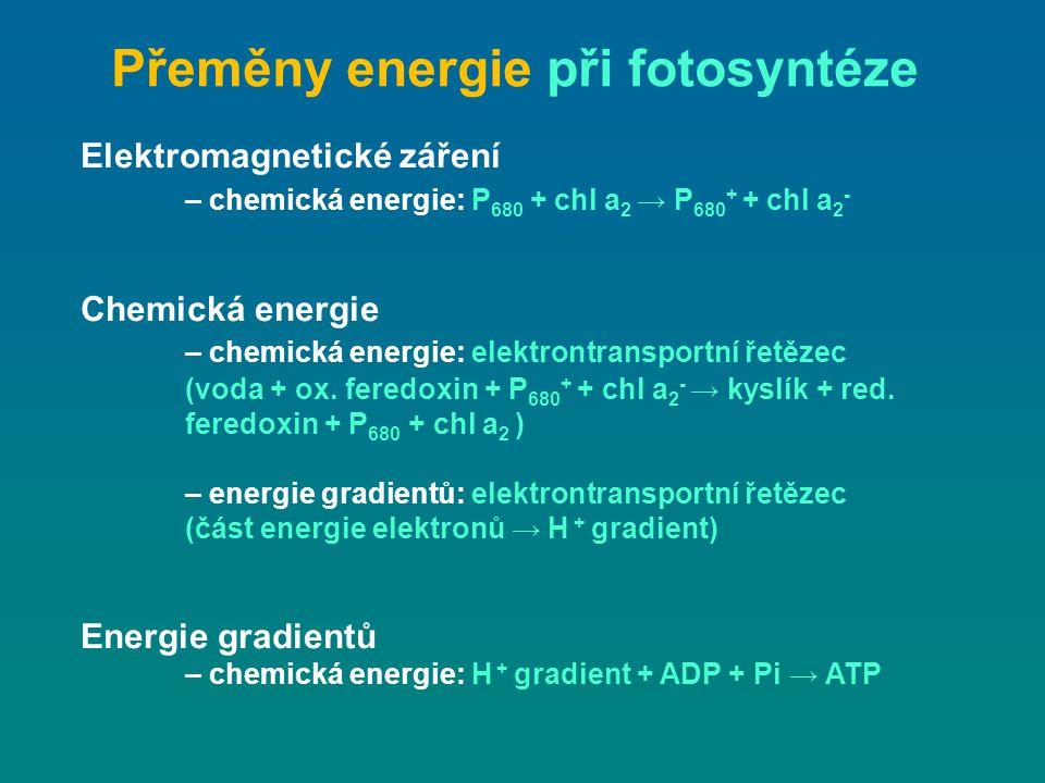 Přeměny energie při fotosyntéze Elektromagnetické záření – chemická energie: P 680 + chl a 2 → P 680 + + chl a 2 - Chemická energie – chemická energie