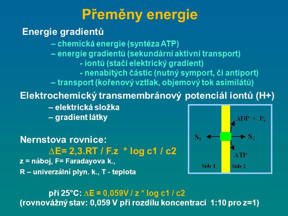 Přeměny energie Energie gradientů – chemická energie (syntéza ATP) – energie gradientů (sekundární aktivní transport) - iontů (stačí elektrický gradie