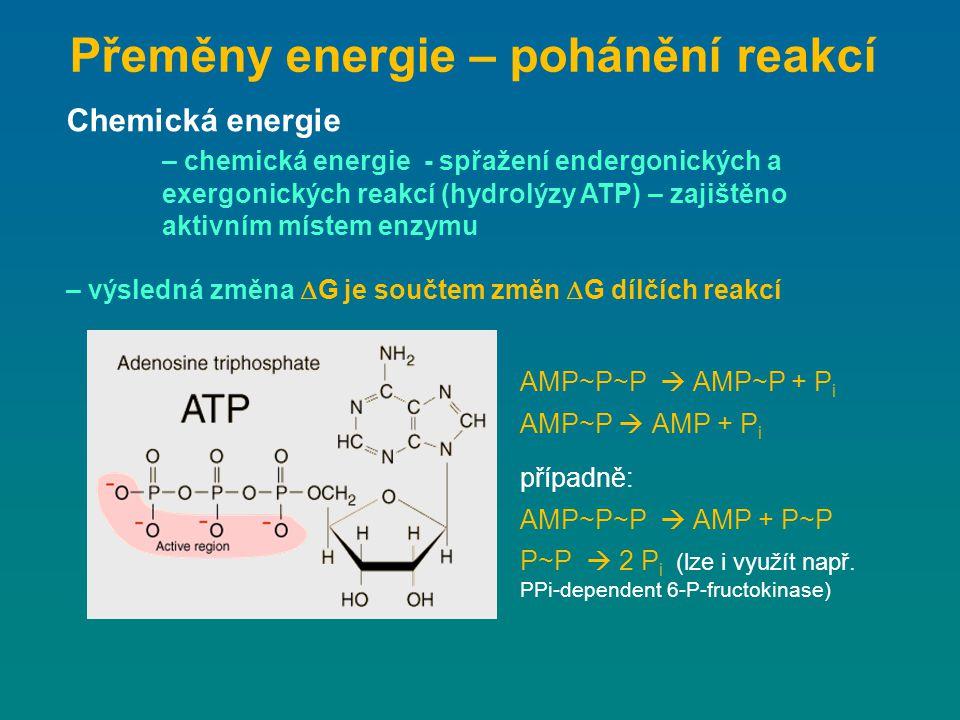Přeměny energie – pohánění reakcí Chemická energie – chemická energie - spřažení endergonických a exergonických reakcí (hydrolýzy ATP) – zajištěno akt
