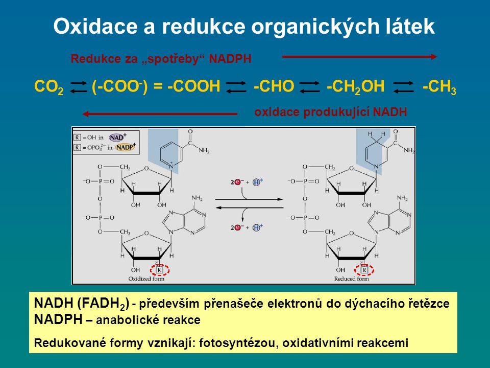 """Oxidace a redukce organických látek CO 2 (-COO - ) = -COOH -CHO -CH 2 OH -CH 3 Redukce za """"spotřeby"""" NADPH oxidace produkující NADH NADH (FADH 2 ) - p"""
