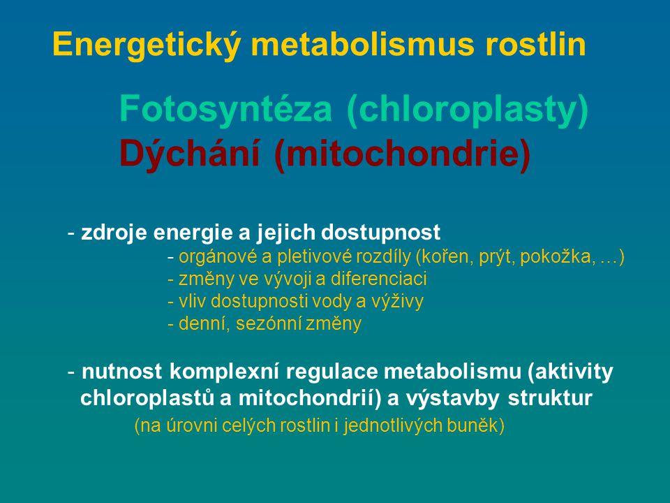 Energetický metabolismus rostlin Fotosyntéza (chloroplasty) Dýchání (mitochondrie) - zdroje energie a jejich dostupnost - orgánové a pletivové rozdíly