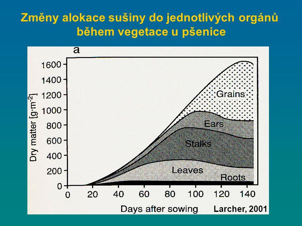 Změny alokace sušiny do jednotlivých orgánů během vegetace u pšenice Larcher, 2001
