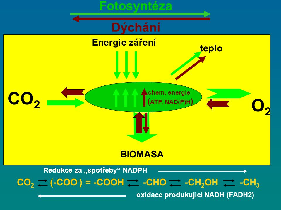 Energie záření CO 2 O2O2 BIOMASA chem.