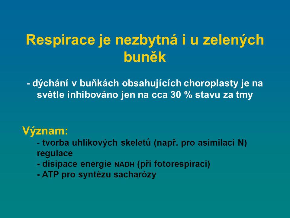 Respirace je nezbytná i u zelených buněk - dýchání v buňkách obsahujících choroplasty je na světle inhibováno jen na cca 30 % stavu za tmy Význam: - t