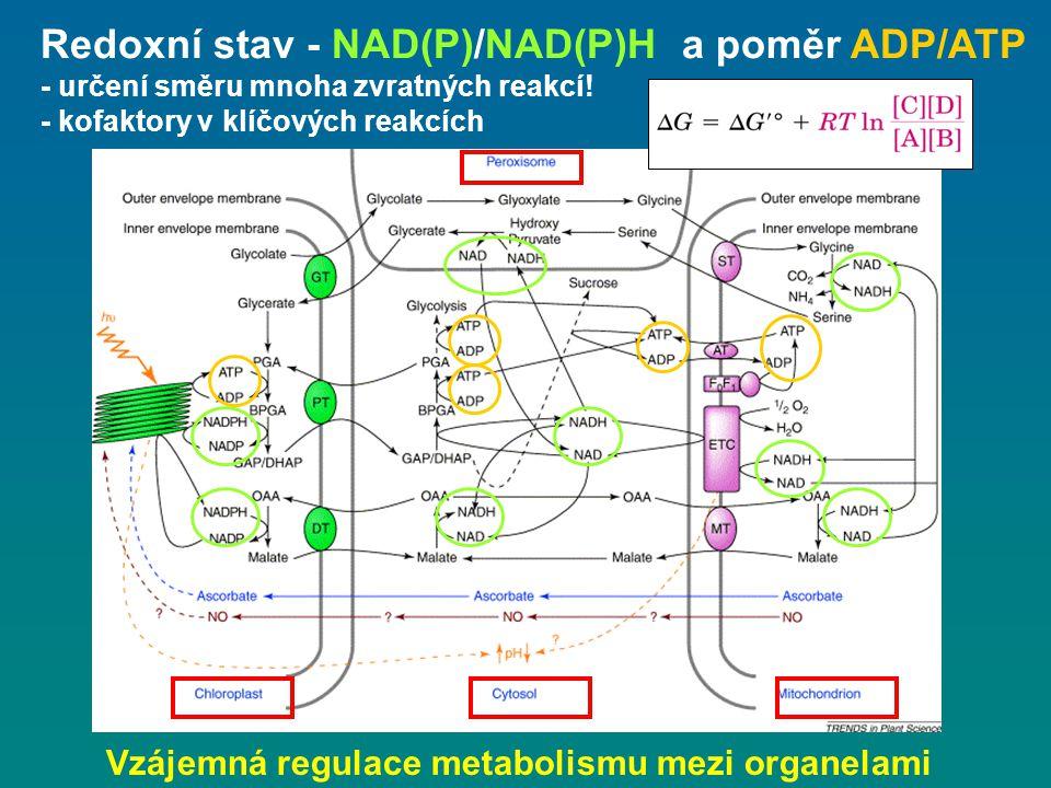 Redoxní stav - NAD(P)/NAD(P)H a poměr ADP/ATP - určení směru mnoha zvratných reakcí! - kofaktory v klíčových reakcích Vzájemná regulace metabolismu me
