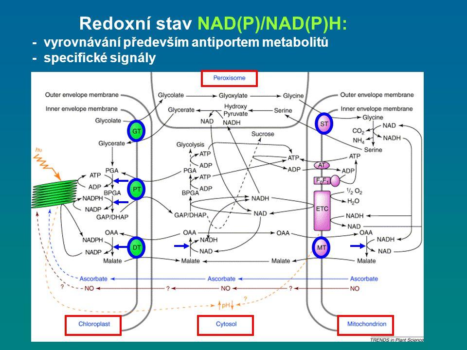 Redoxní stav NAD(P)/NAD(P)H: - vyrovnávání především antiportem metabolitů - specifické signály