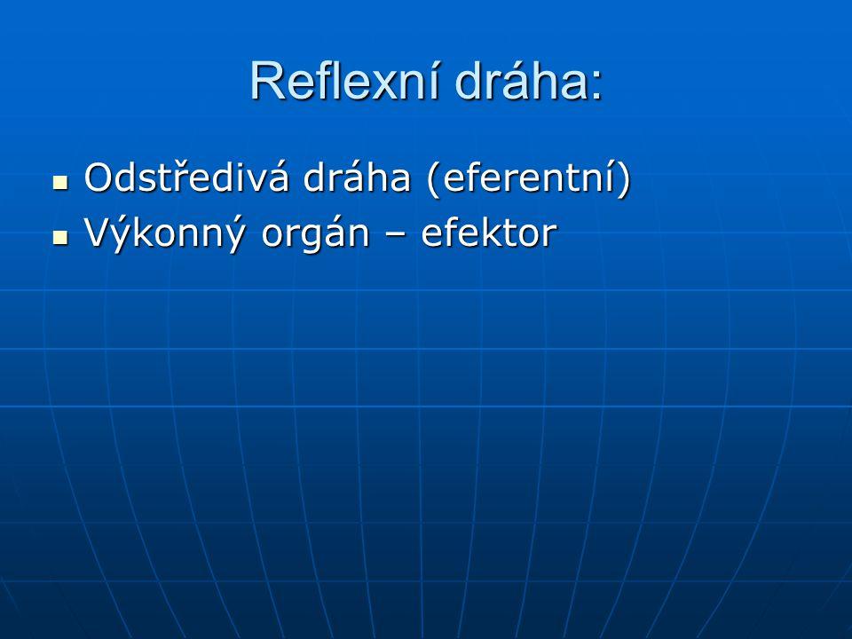 Reflexní dráha: Odstředivá dráha (eferentní) Odstředivá dráha (eferentní) Výkonný orgán – efektor Výkonný orgán – efektor
