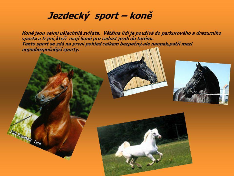 Jezdecký sport – koně Koně jsou velmi ušlechtilá zvířata. Většina lidí je používá do parkurového a drezurního sportu a ti jiní,kteří mají koně pro rad