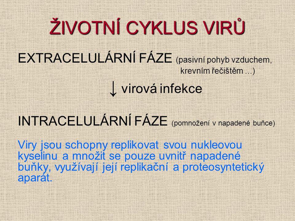 ŽIVOTNÍ CYKLUS VIRŮ EXTRACELULÁRNÍ FÁZE (pasivní pohyb vzduchem, krevním řečištěm...) ↓ virová infekce INTRACELULÁRNÍ FÁZE (pomnožení v napadené buňce) Viry jsou schopny replikovat svou nukleovou kyselinu a množit se pouze uvnitř napadené buňky, využívají její replikační a proteosyntetický aparát.