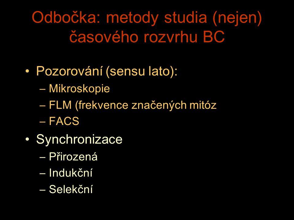 Odbočka: metody studia (nejen) časov é ho rozvrhu BC Pozorov á n í (sensu lato): –Mikroskopie –FLM (frekvence značených mit ó z –FACS Synchronizace –P