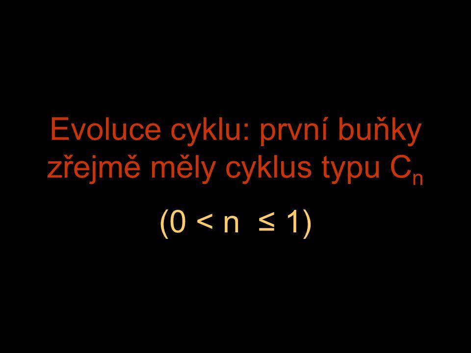 Evoluce cyklu: první buňky zřejmě měly cyklus typu C n (0 < n ≤ 1)