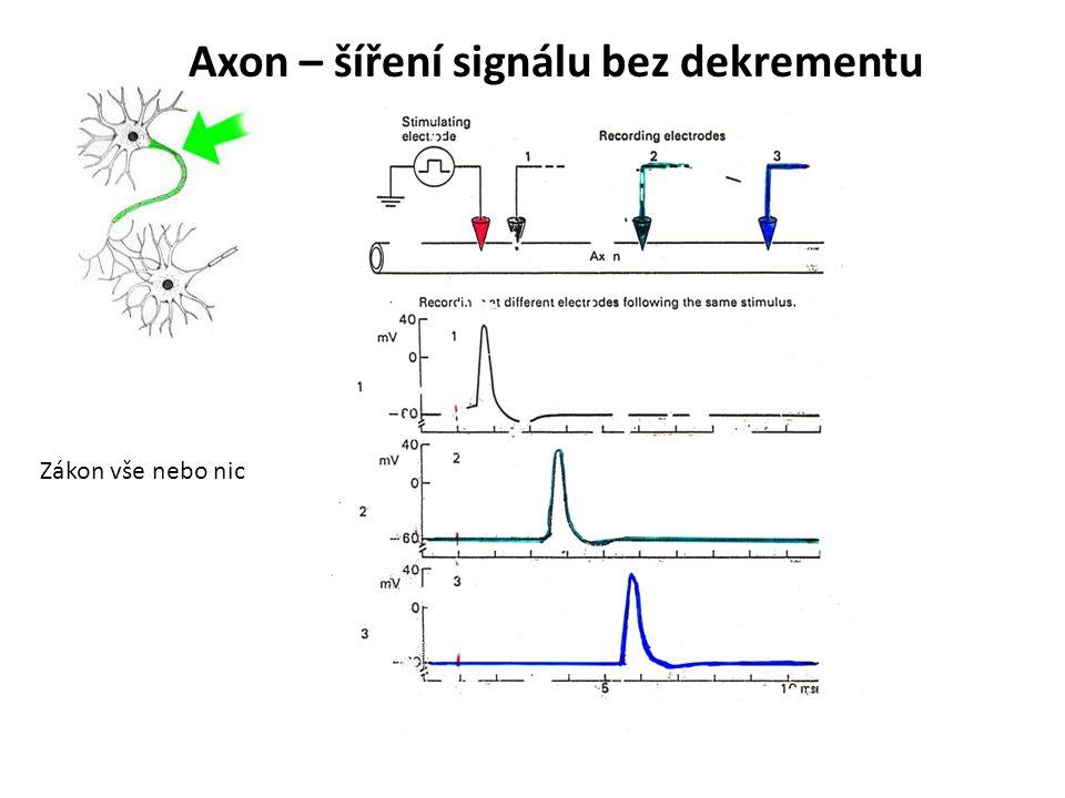 Axon – šíření signálu bez dekrementu Zákon vše nebo nic