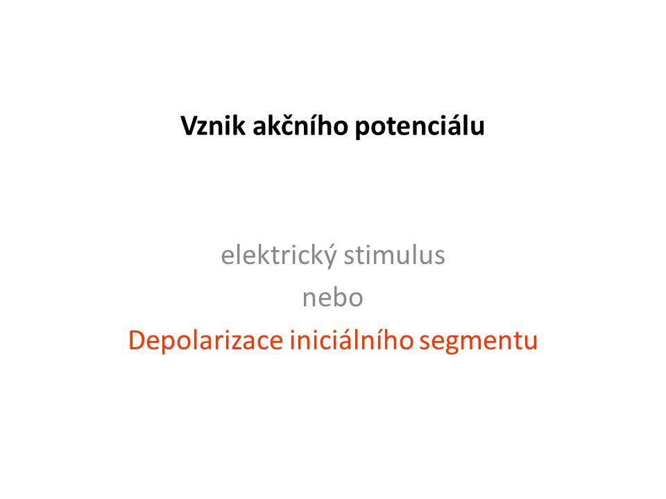 Vznik akčního potenciálu elektrický stimulus nebo Depolarizace iniciálního segmentu