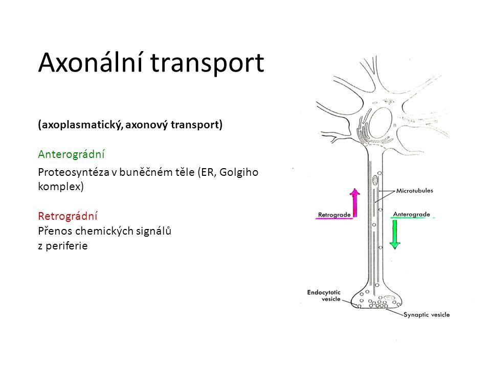 Axonální transport (axoplasmatický, axonový transport) Anterográdní Proteosyntéza v buněčném těle (ER, Golgiho komplex) Retrográdní Přenos chemických signálů z periferie