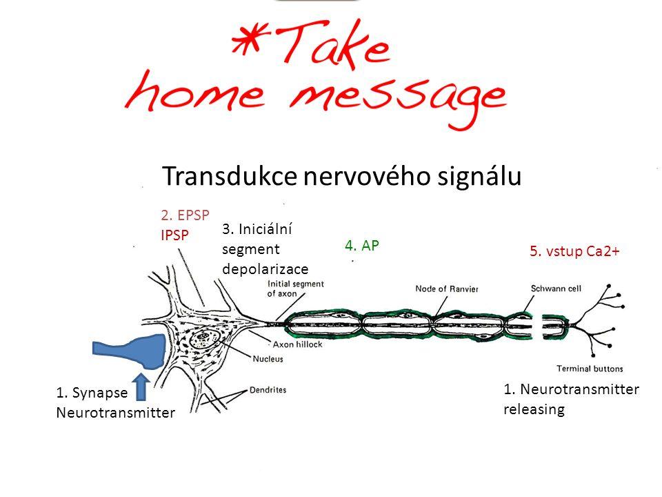 4.AP 5. vstup Ca2+ 1. Synapse Neurotransmitter 1.