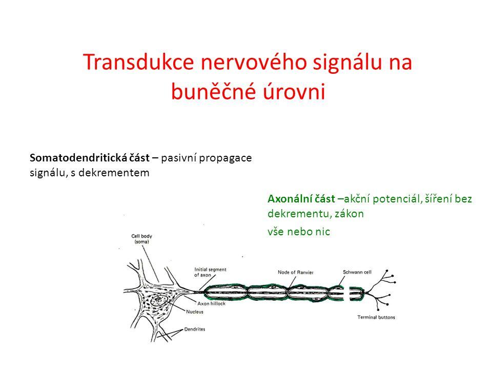 Somatodendritická část Receptory na postsynaptické membráně Excitační – otevření kanálu pro Na +, Ca 2+ – depolarizace membrány Inhibiční - otevření kanálu pro K +, Cl - – hyperpolarizace membrány EPSP – excitační postsynaptický potenciál IPSP – inhibiční postsynaptický potenciál