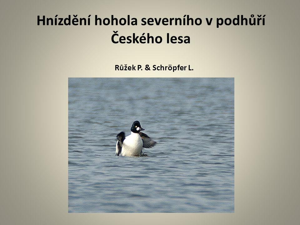 Hnízdění hohola severního v podhůří Českého lesa Růžek P. & Schröpfer L.