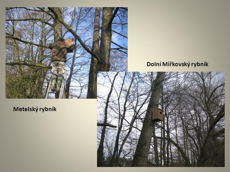 Dolní Miřkovský rybník Metelský rybník