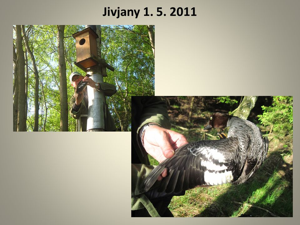 Jivjany 1. 5. 2011