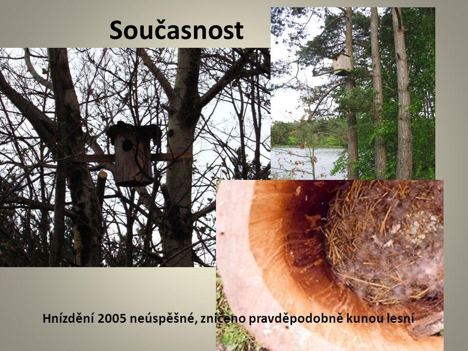Současnost Hnízdění 2005 neúspěšné, zničeno pravděpodobně kunou lesní
