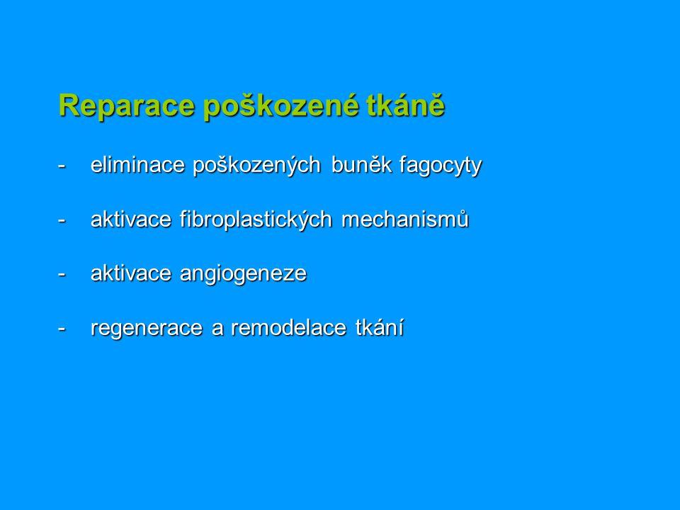 Reparace poškozené tkáně - eliminace poškozených buněk fagocyty - aktivace fibroplastických mechanismů - aktivace angiogeneze - regenerace a remodelac