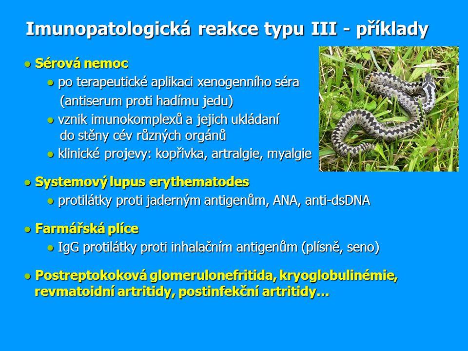 ● Sérová nemoc ● po terapeutické aplikaci xenogenního séra (antiserum proti hadímu jedu) (antiserum proti hadímu jedu) ● vznik imunokomplexů a jejich