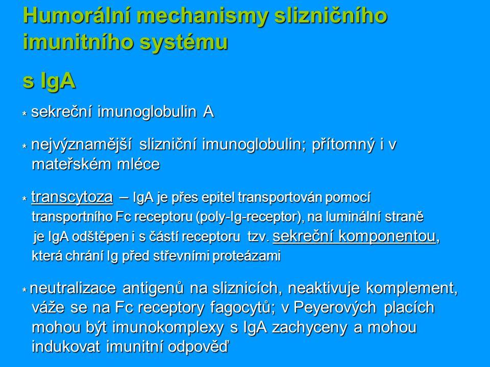 Humorální mechanismy slizničního imunitního systému s IgA * sekreční imunoglobulin A * nejvýznamější slizniční imunoglobulin; přítomný i v mateřském m