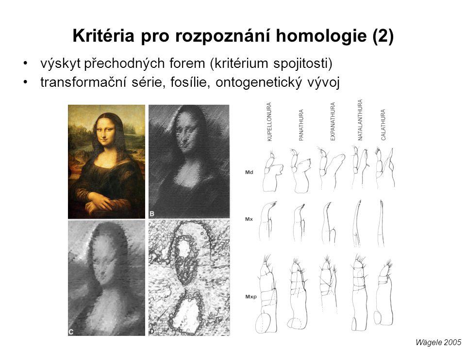 výskyt přechodných forem (kritérium spojitosti) transformační série, fosílie, ontogenetický vývoj Kritéria pro rozpoznání homologie (2) Wägele 2005