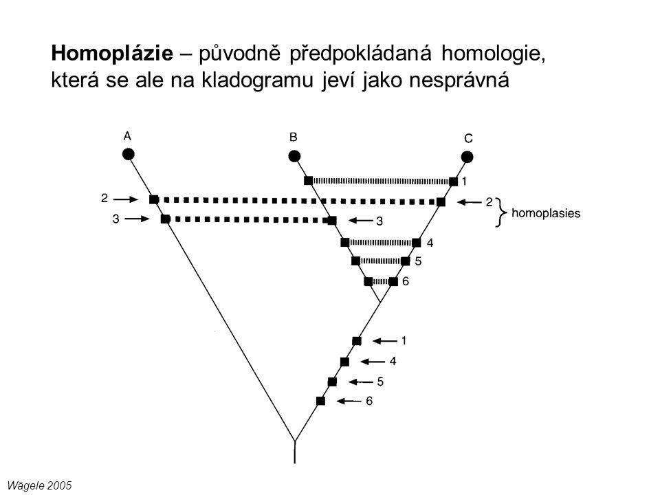 Homoplázie – původně předpokládaná homologie, která se ale na kladogramu jeví jako nesprávná Wägele 2005