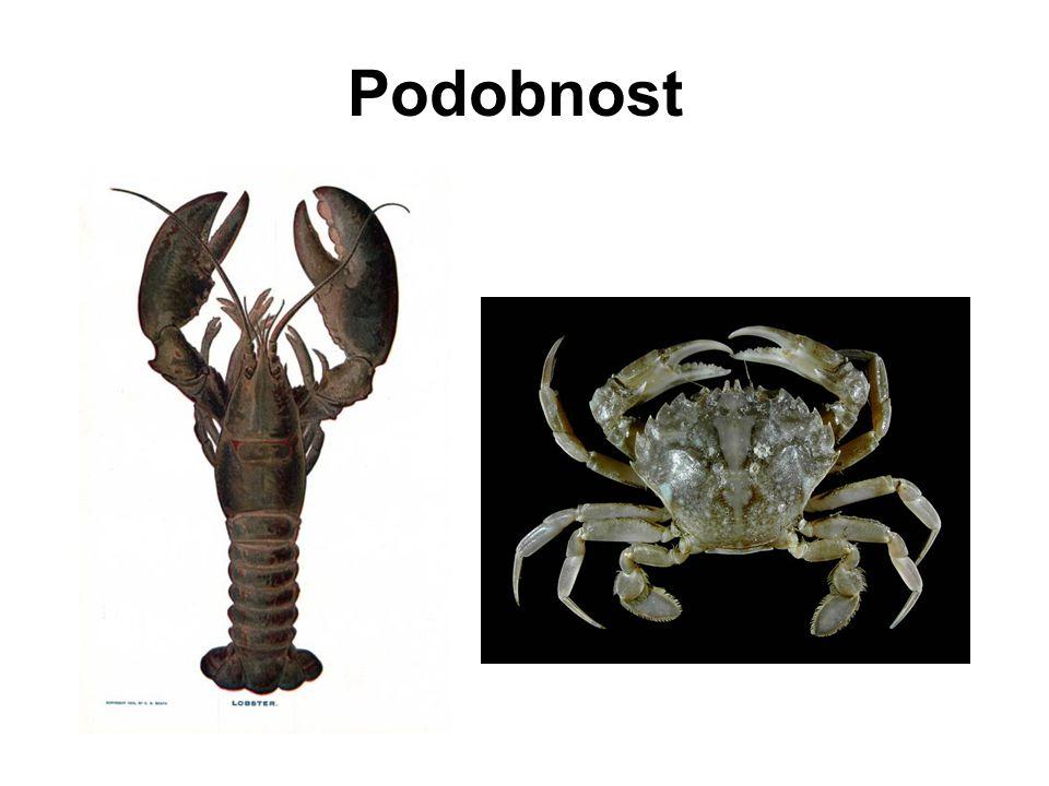 Remane (1952, 1962), Patterson (1982) stejná pozice na těle a vůči jiným orgánům (topologické kritérium) Kritéria pro rozpoznání homologie (1) Collembola Coleoptera Crustacea Wägele 2005