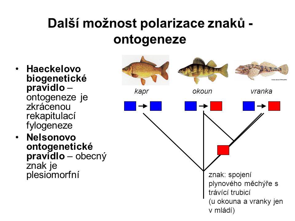 Další možnost polarizace znaků - ontogeneze Haeckelovo biogenetické pravidlo – ontogeneze je zkrácenou rekapitulací fylogeneze Nelsonovo ontogenetické