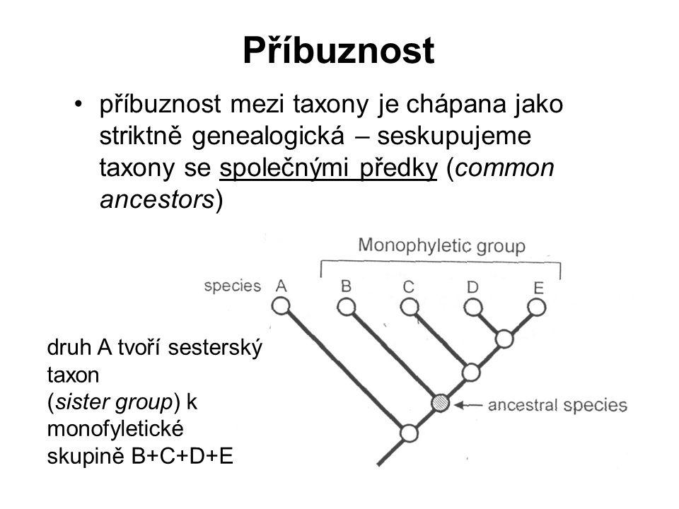 b2) znaky se u taxonů vyskytují ve dvou podobách (stavech): dva taxony sdílejí stejnou podobu znaku oproti třetímu, ale informace z obou znaků jsou vzájemně v rozporu plesiomorfie apomorfie  konflikt v datech, 2 možná řešení: skupiny B+C a A+B  jeden ze znaků 1-1 a 2-1 je homoplázie Taxon ATaxon BTaxon C 1 – 0 2 – 0 1 – 1 2 – 1 Taxon ATaxon BTaxon C 1 – 0 2 – 0 1 – 1 2 – 0 1 – 0 2 – 02 – 1 Homologie více znaků mezi dvěma a více taxony