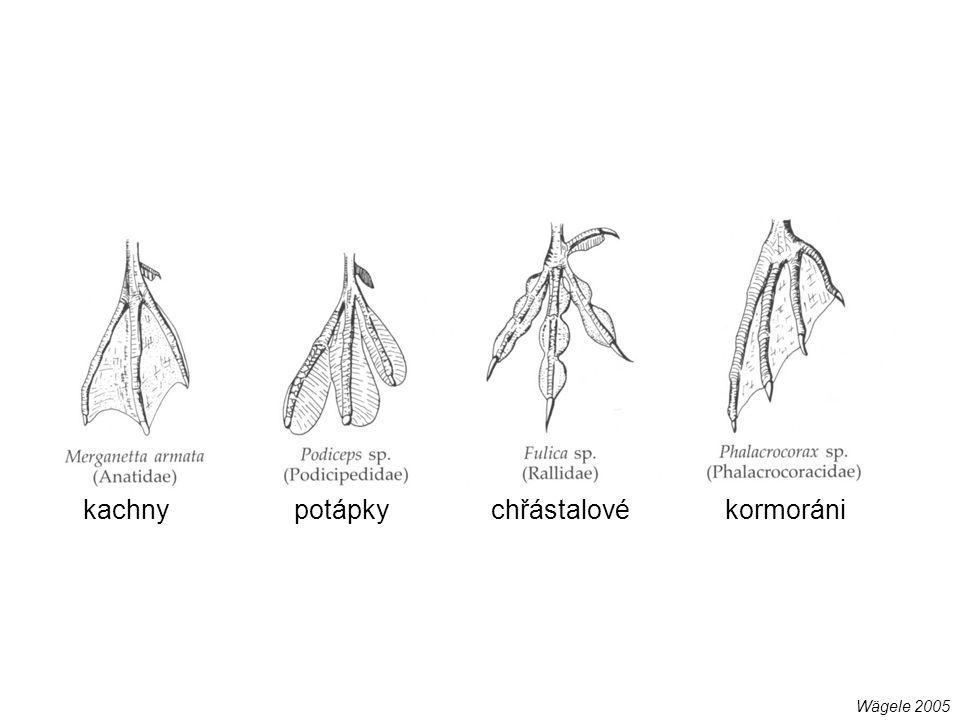 kondoři (Cathartidae) supi (Accipitridae) krtci (Talpidae, Insectivora)pláštníci (Chlamyphorinae, Xenarthra) slepci (Spalacidae, Rodentia)