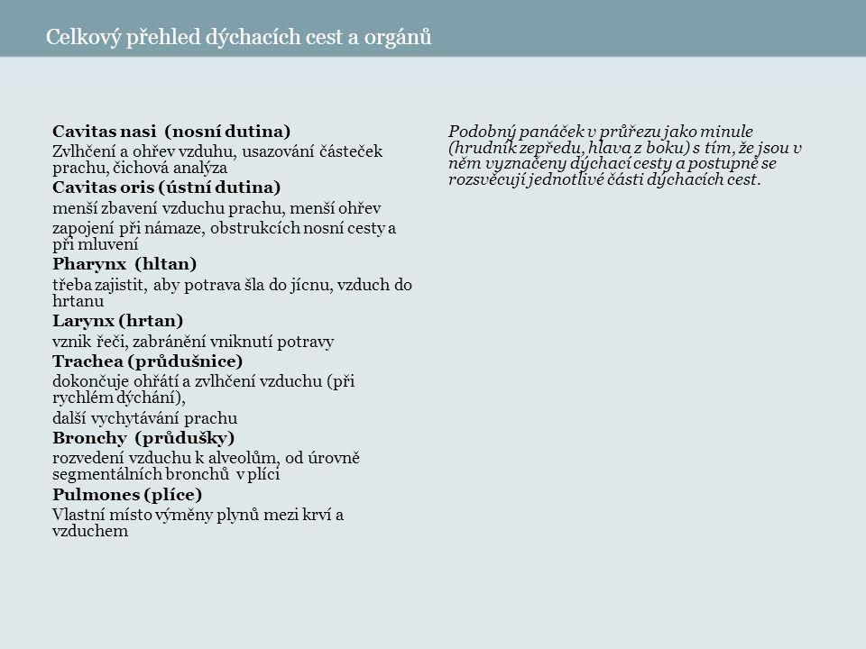 Celkový přehled dýchacích cest a orgánů Cavitas nasi (nosní dutina) Zvlhčení a ohřev vzduhu, usazování částeček prachu, čichová analýza Cavitas oris (