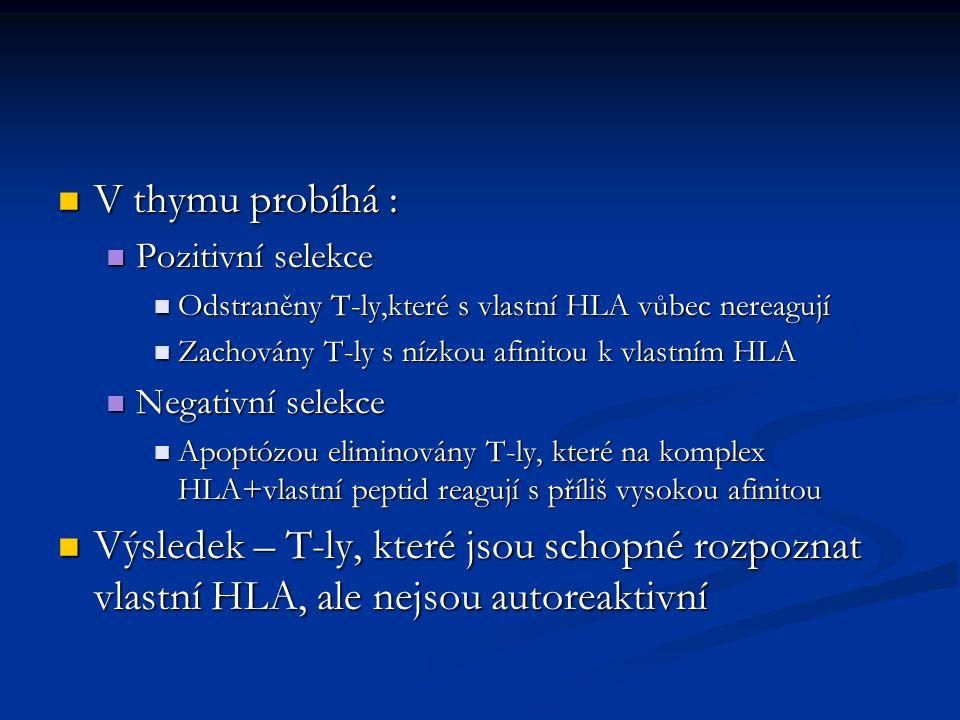 V thymu probíhá : V thymu probíhá : Pozitivní selekce Pozitivní selekce Odstraněny T-ly,které s vlastní HLA vůbec nereagují Odstraněny T-ly,které s vlastní HLA vůbec nereagují Zachovány T-ly s nízkou afinitou k vlastním HLA Zachovány T-ly s nízkou afinitou k vlastním HLA Negativní selekce Negativní selekce Apoptózou eliminovány T-ly, které na komplex HLA+vlastní peptid reagují s příliš vysokou afinitou Apoptózou eliminovány T-ly, které na komplex HLA+vlastní peptid reagují s příliš vysokou afinitou Výsledek – T-ly, které jsou schopné rozpoznat vlastní HLA, ale nejsou autoreaktivní Výsledek – T-ly, které jsou schopné rozpoznat vlastní HLA, ale nejsou autoreaktivní