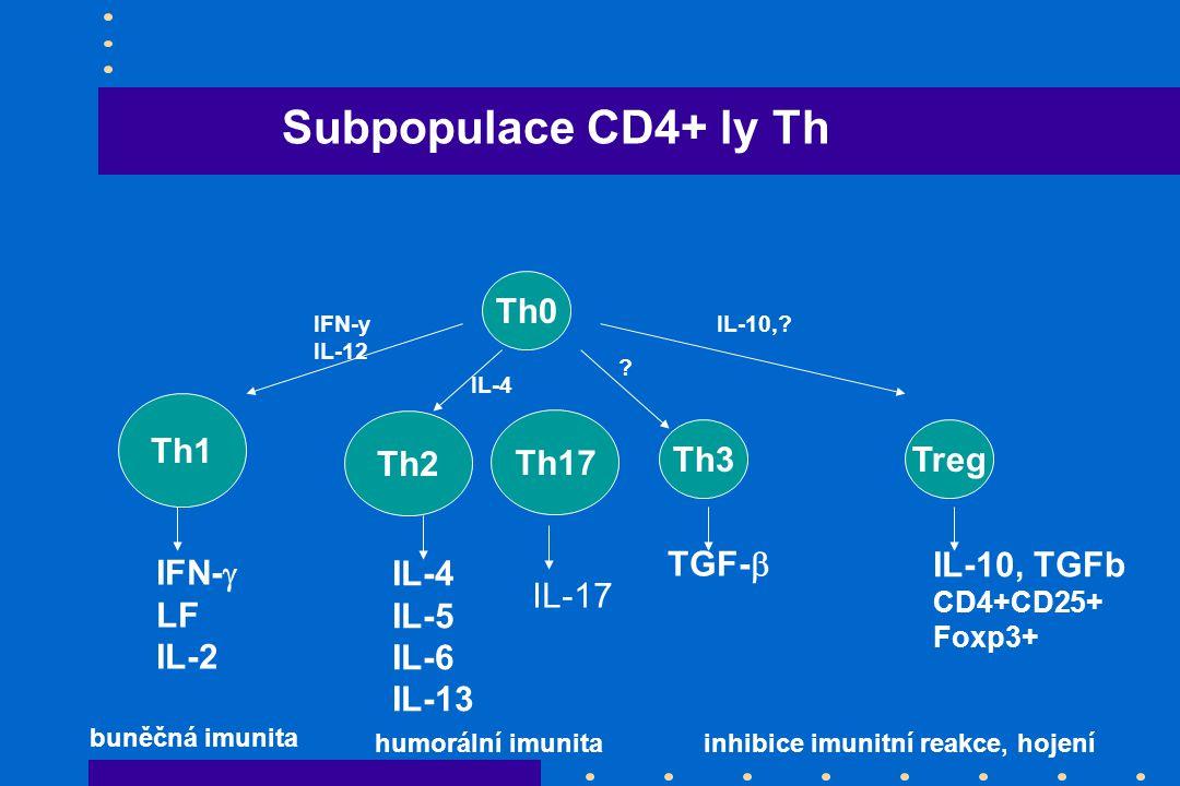 Th0 Th3 Th1 Th2 Treg IFN-  LF IL-2 IL-4 IL-5 IL-6 IL-13 TGF-  IL-10, TGFb CD4+CD25+ Foxp3+ IFN-y IL-12 IL-4 IL-10,? ? buněčná imunita humorální imun