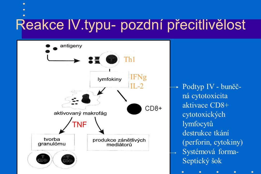 Reakce IV.typu- pozdní přecitlivělost Th1 IFNg IL-2 Podtyp IV - buněč- ná cytotoxicita aktivace CD8+ cytotoxických lymfocytů destrukce tkání (perforin