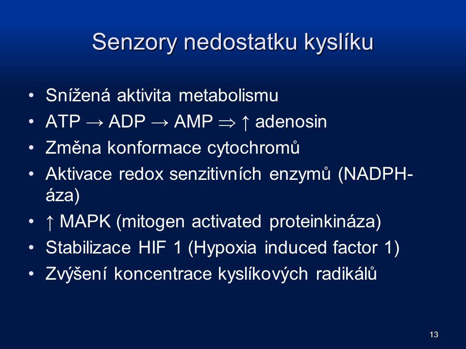 Senzory nedostatku kyslíku Snížená aktivita metabolismu ATP → ADP → AMP  ↑ adenosin Změna konformace cytochromů Aktivace redox senzitivních enzymů (N