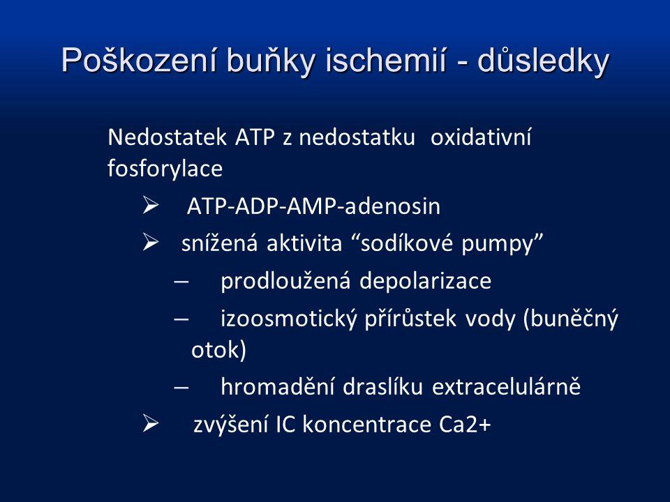 """Poškození buňky ischemií - důsledky Nedostatek ATP z nedostatku oxidativní fosforylace  ATP-ADP-AMP-adenosin  snížená aktivita """"sodíkové pumpy"""" – pr"""