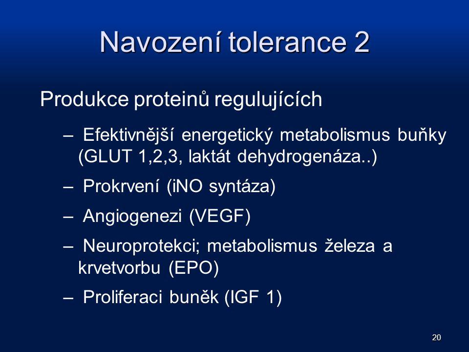 Navození tolerance 2 Produkce proteinů regulujících – Efektivnější energetický metabolismus buňky (GLUT 1,2,3, laktát dehydrogenáza..) – Prokrvení (iN