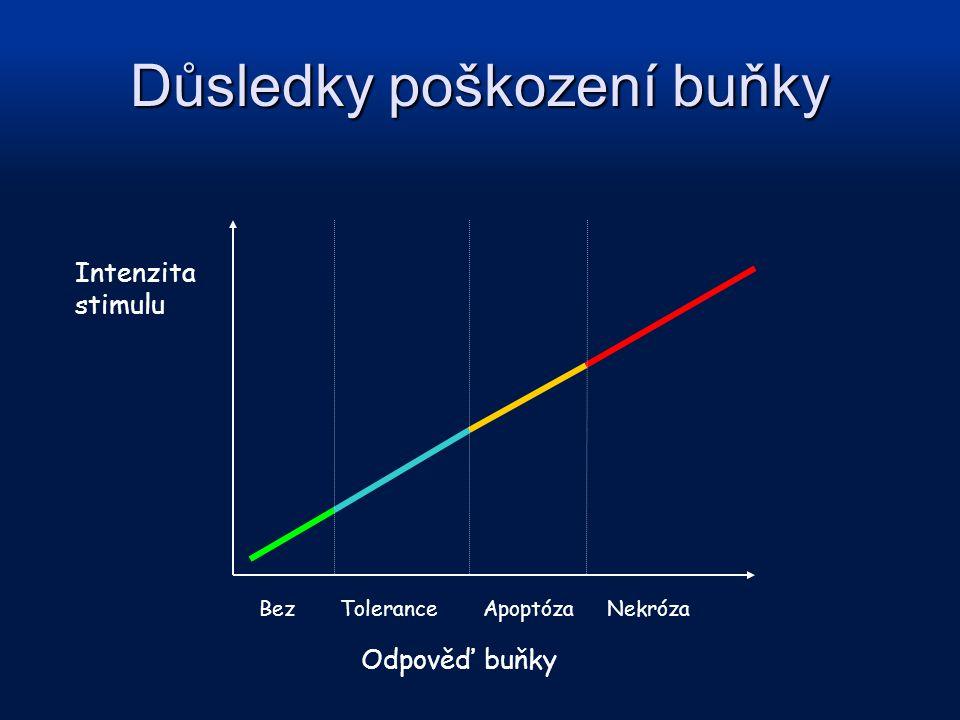 Intenzita stimulu Bez Tolerance Apoptóza Nekróza Odpověď buňky Důsledky poškození buňky