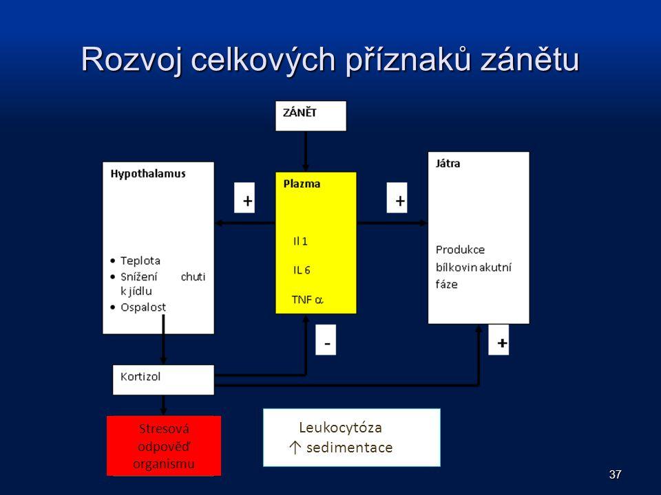 Rozvoj celkových příznaků zánětu 37 Leukocytóza ↑ sedimentace Stresová odpověď organismu