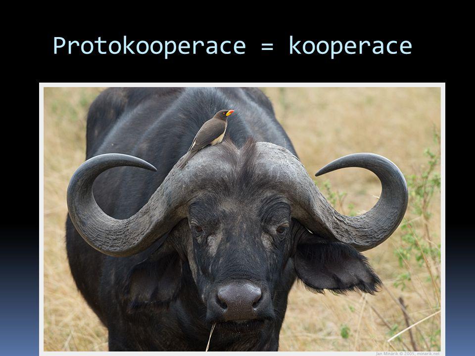 Protokooperace = kooperace