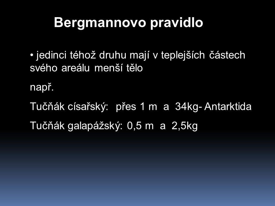 Bergmannovo pravidlo jedinci téhož druhu mají v teplejších částech svého areálu menší tělo např. Tučňák císařský: přes 1 m a 34kg- Antarktida Tučňák g