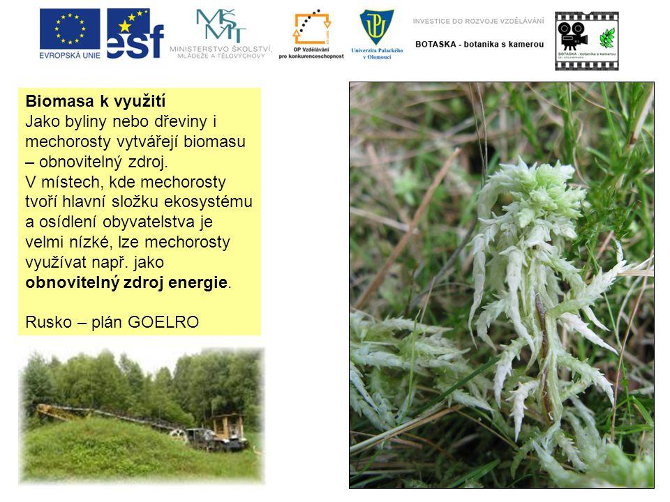 Biomasa k využití Jako byliny nebo dřeviny i mechorosty vytvářejí biomasu – obnovitelný zdroj.