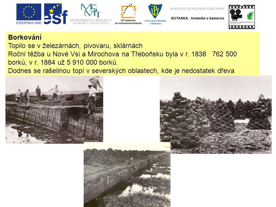 Borkování Topilo se v železárnách, pivovaru, sklárnách Roční těžba u Nové Vsi a Mirochova na Třeboňsku byla v r.