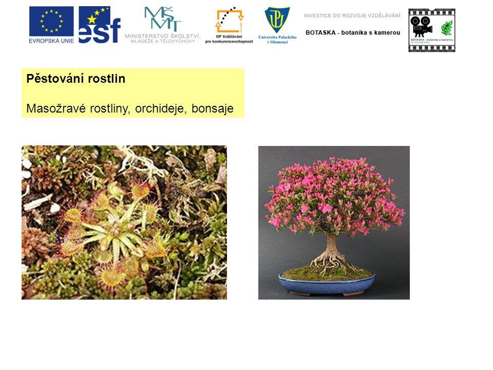 Pěstování rostlin Masožravé rostliny, orchideje, bonsaje