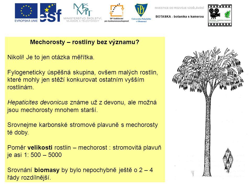 Mechorosty – rostliny bez významu.Nikoli. Je to jen otázka měřítka.